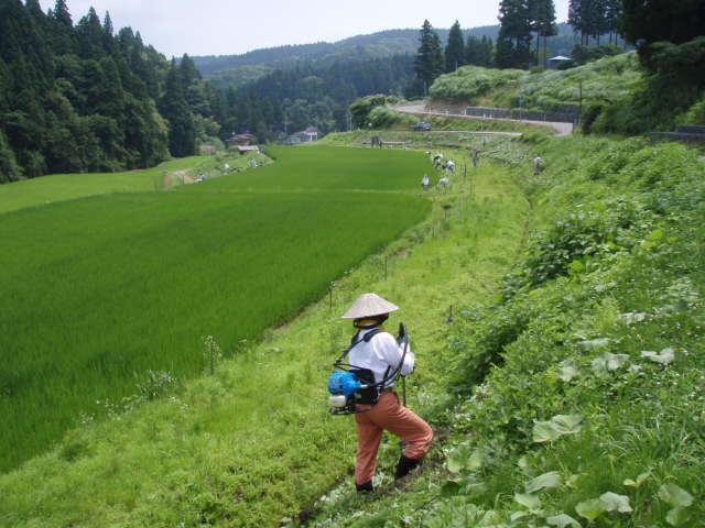 080720草刈07
