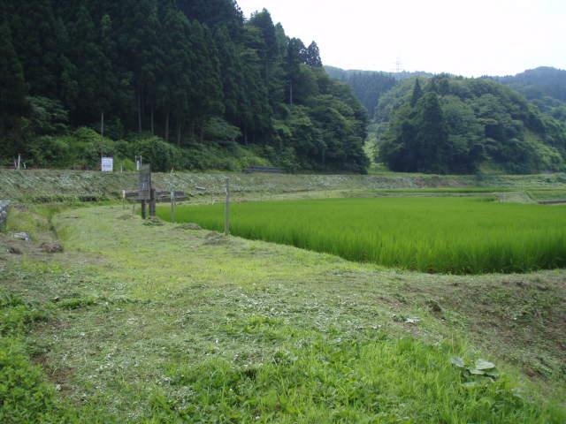 080720草刈10