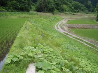 090607#1草刈り02