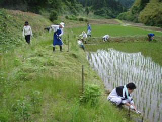 090607#1草刈り05