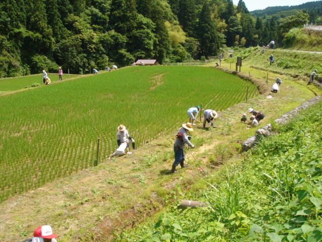 草刈070617-02