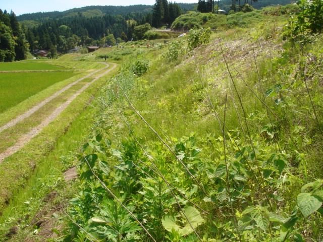 草刈070617-03