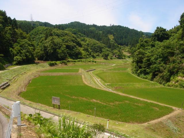草刈070617-05
