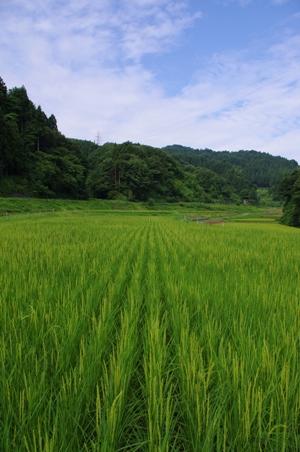 100808草刈り04