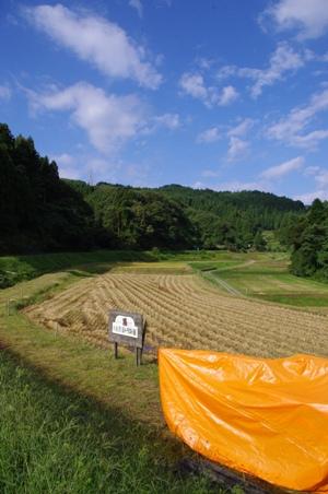 100926稲刈り01